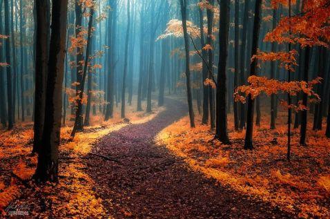 20 нереально красивих знімків казкових осінніх лісів від Янека Седлара