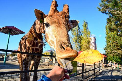 Як знімати жирафа. Лайфхак