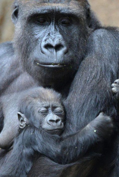 14 зворушливих і забавних фото диких тварин з їх чарівними дитинчатами