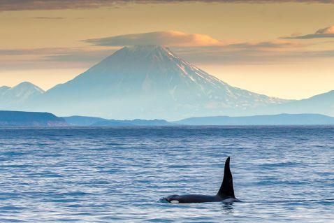 Первозданна Камчатка: Тихий океан