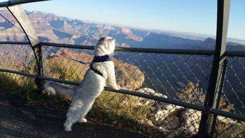 Кіт-мандрівник Гендальф, який провів зимові канікули краще, ніж ти!