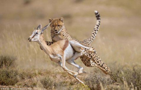 Царство тварин: захоплюючі кадри погоні, бійки і ніжних моментів