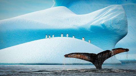 20 чарівних знімків пінгвінів, які доводять, що не любити цих птахів неможливо!