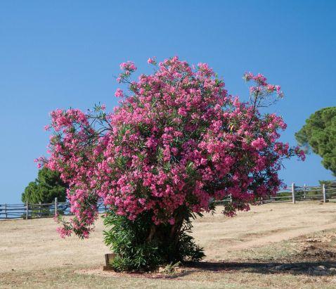10 найбільш смертоносних рослин світу