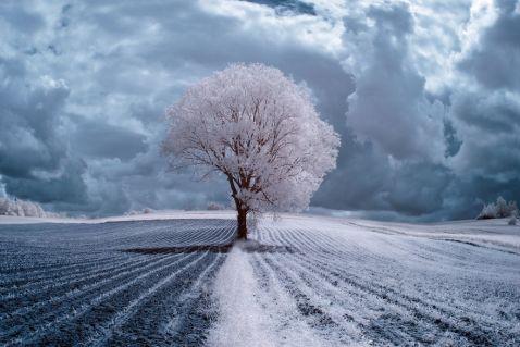 11 незвичайних знімків величної краси дерев