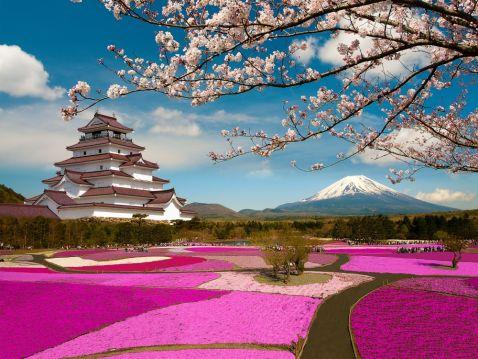 12 чарівних знімків цвітіння сакури