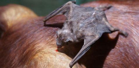 7 страшних тварин-вампірів, про які потрібно знати