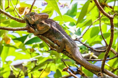 Парад хамелеонів Мадагаскару