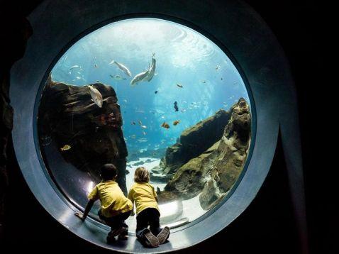 18 незабутніх і експресивних знімків дикої природи від National Geographic