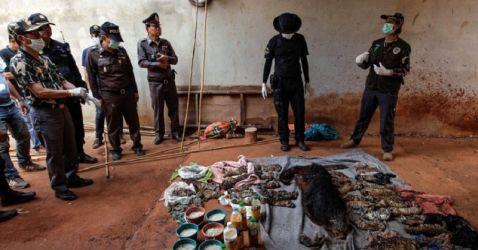 Скандал в Таїланді: моторошна знахідка в морозилках буддійського монастиря