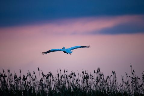 В гостях у пеліканів
