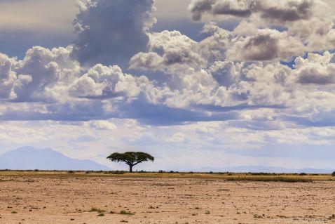 Під дахом Африки. Амбоселі