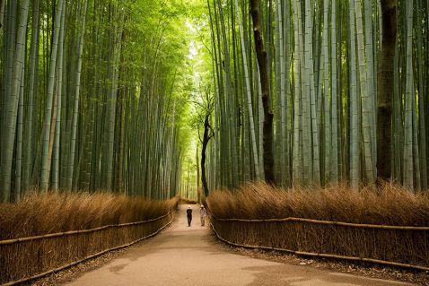 15 прекрасних причин поїхати до Японії