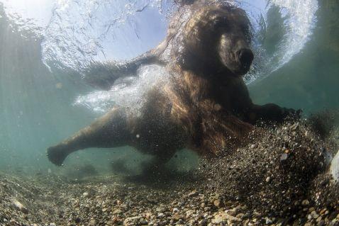Росіянин Михайло Коростельов став призером конкурсу Underwater Photographer of the Year 2016