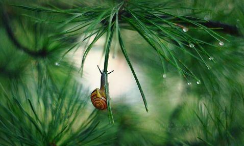 Польський фотограф робить фантастичні знімки про життя равликів