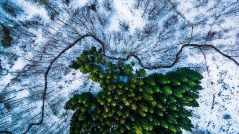 9 кращих знімків з конкурсу дрон-фотографії, які підкорили світ