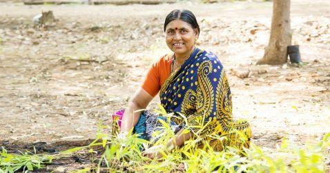 Жителі Індії посадили 50 мільйонів дерев всього за одну добу!