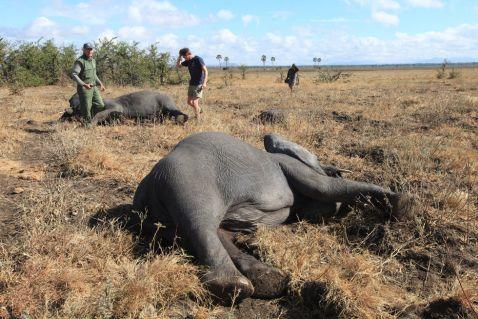 Особливості перевезення слонів: 13 цікавих кадрів