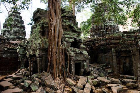 Гармонія дерева і каменю храму Та Пром