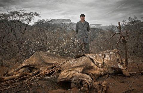 21 сумне фото, доводить, що ми — самі страшні звірі на планеті