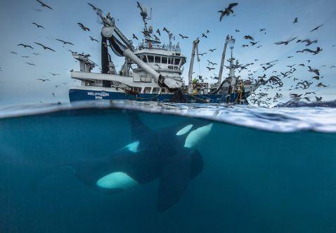 11 приголомшливих фото фіналістів конкурсу Wildlife Photographer Of The Year 2016