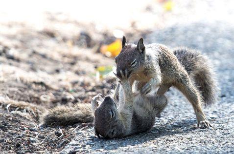 28 експресивних знімків протистояння тварин в дикій природі
