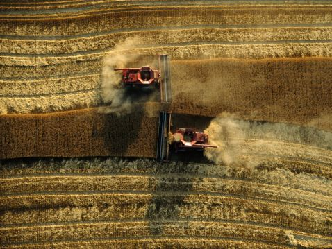 15 яскравих та цікавих фото про те, як збирають урожай на полях у різних країнах світу