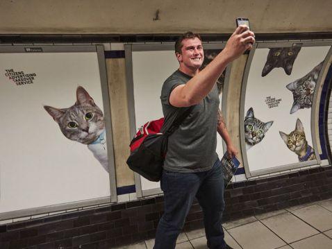 На одній із станцій лондонського метро всю рекламу замінили котиками
