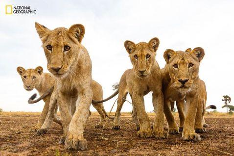 15 незабутніх знімків дикої природи з конкурсу National Geographic Nature Photographer of the Year