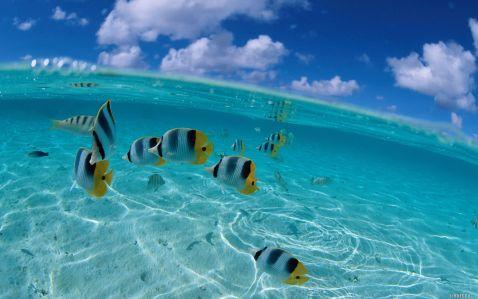 Саме красиве море
