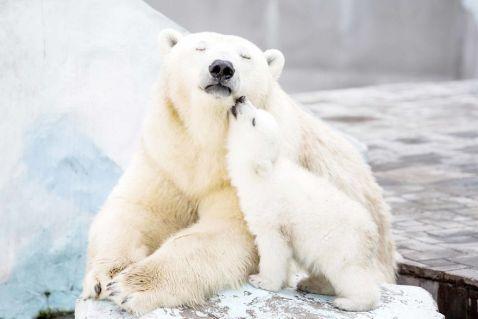15 зворушливих і милих фото про те, як ведмежата вчаться бути ведмедями