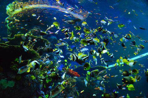 Найбільший у світі океанаріум