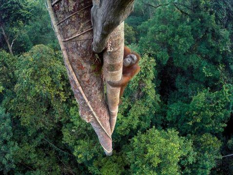 Британський музей вибрав кращі фотографії дикої природи 2016 року