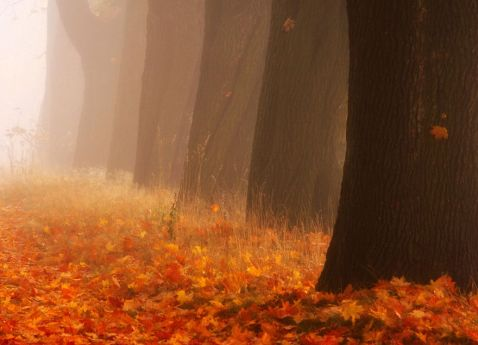 9 чарівних фото з Польщі, на яких відображена справжня душа осені