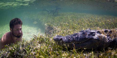 Він прикинувся крокодилом, щоб підійти до хижака впритул і зробити ці неймовірні кадри
