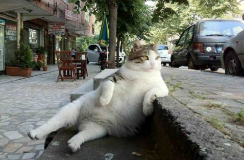 Викрадений пам'ятник найвідомішому коту Туреччини
