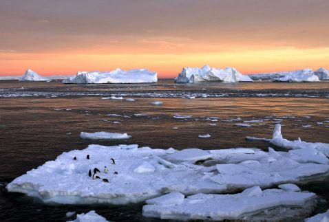 В Антарктиді створять найбільший морський заповідник