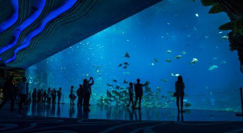Самий великий акваріум