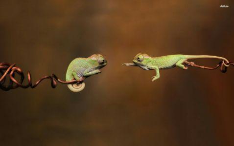 10 цікавих фото дитинчат хамелеонів, які змусять тебе закохатися в них