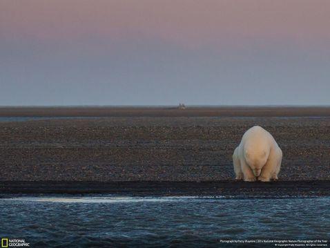 15 переможців конкурсу фотографій дикої природи National Geographic 2016 року