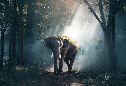 У Китаї заборонили продаж слонової кістки. І це історичний момент!