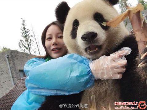 Ця гігантська панда — справжній гуру селфи. Вчись, як треба фотографувати себе!