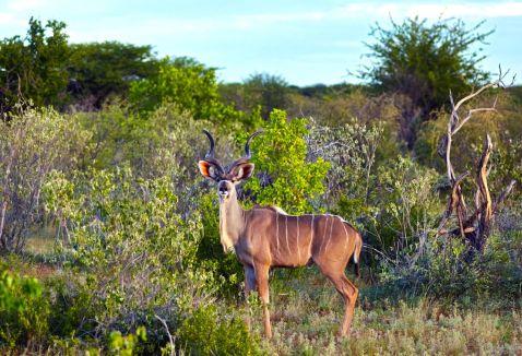 25 дивовижних знімків дикої природи Намібії, від який прискорюється пульс