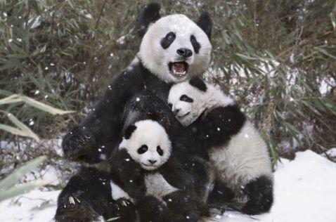 28 забавних кадрів про складні взаємини тварин зі снігом