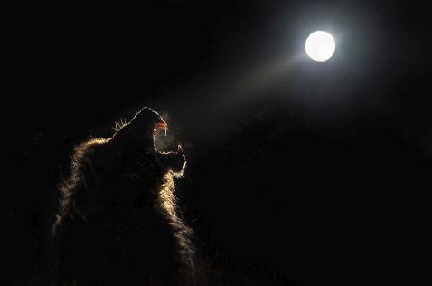 14 прекрасних і дивовижних кадрів про нічне життя африканських тварин