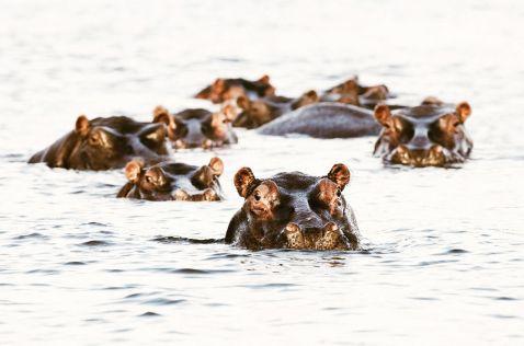 20 фотографій диких тварин, які заткнуть за пояс будь-яку супермодель