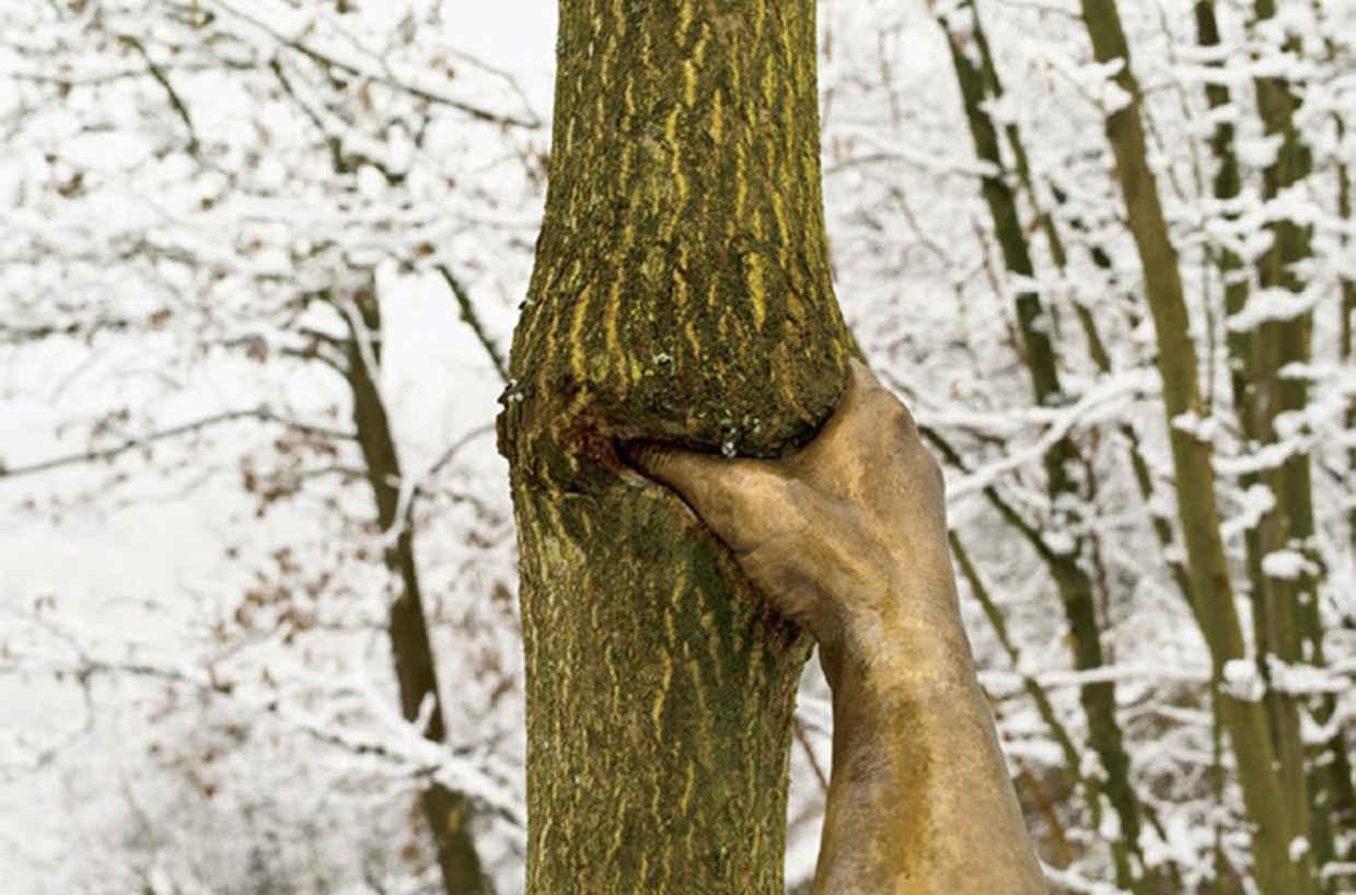 Привязана к дереву ему