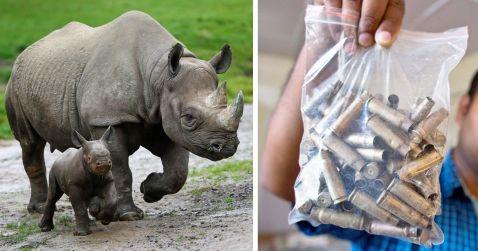 У національному парку відстрілюють людей, щоб зберегти носорогів