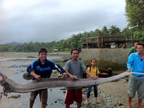 На берег Філіппін викинувся гігантський морський змій!