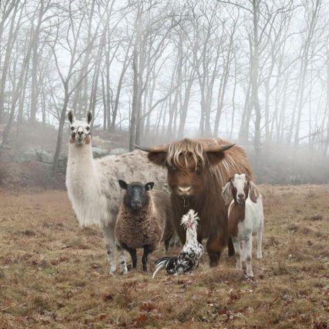 10 класних фото тварин з усього світу, які виглядають як рок-зірки